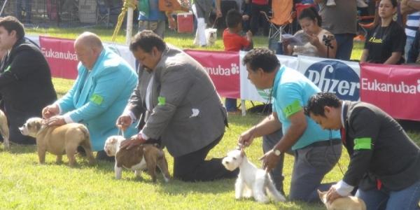 Con éxito se desarrolla exposición canina organizada por la Universidad Autónoma de Chiapas