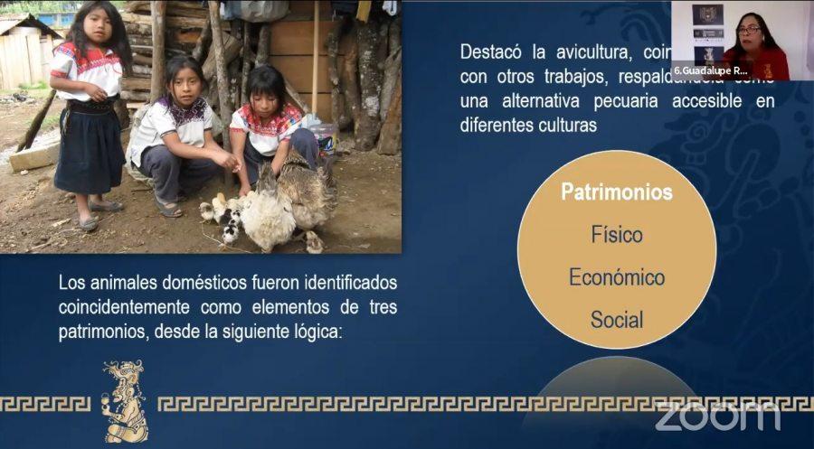 Realizan en la UNACH la investigación sobre la importancia de los animales domésticos en familias campesinas