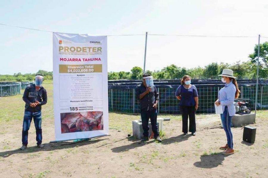 Participa UNACH en proyecto de producción de mojarra Tahuina  en comunidades de Huixtla
