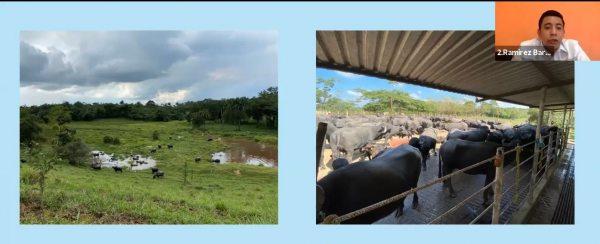 Desarrolla UNACH investigación sobre  producción de búfalos en Chiapas